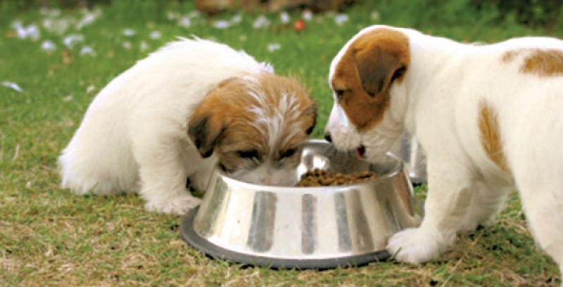 Why Commercial Dog Food Storage a very good idea For The Animal Feeds