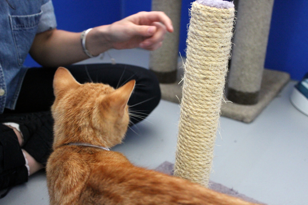 Cat Training – How you can Stop Your Cat From Scratching Your Furniture