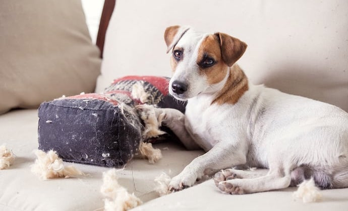 Preventing Your Pet From Destroying Your House