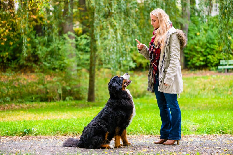 Training Dogs Basics – Canine Training