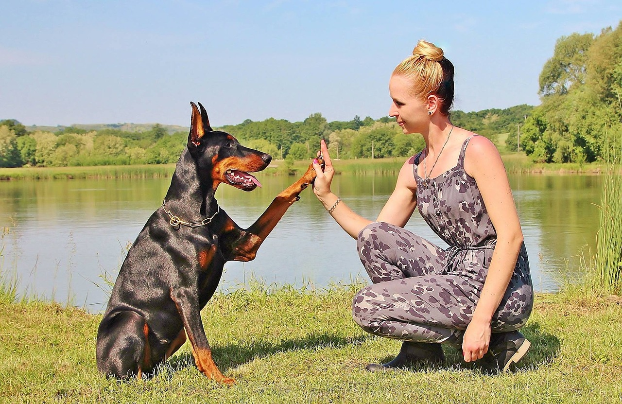 How to be an expert Dog Trainer