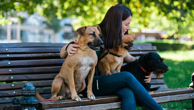 Getting a Pet Sitter: Selecting the best Care Giver For The Pet