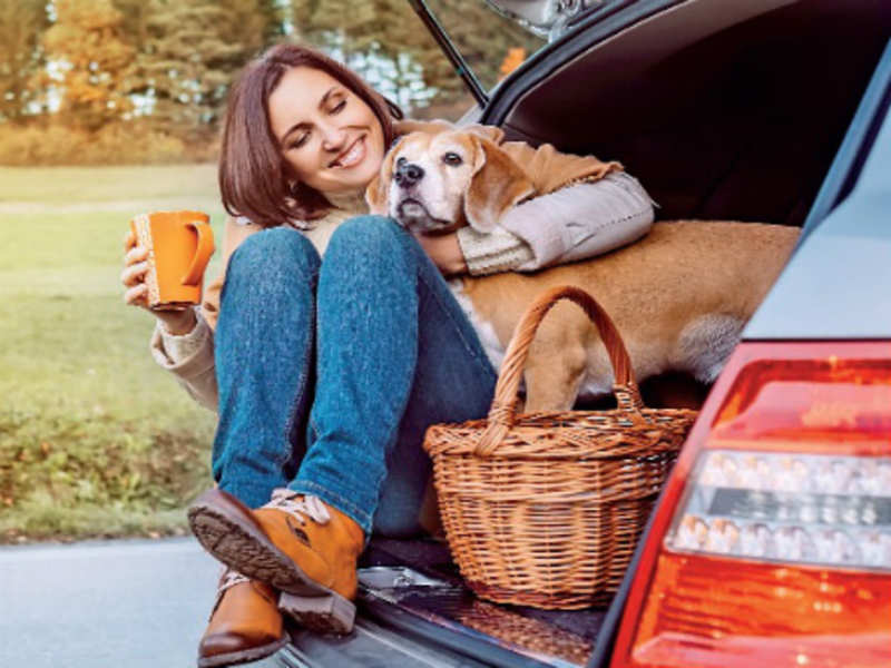 Strategies for Holiday Travel Together With Your Pet