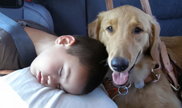 Are Seizures Affecting Quality of Your Life? – Get A Seizure Dog