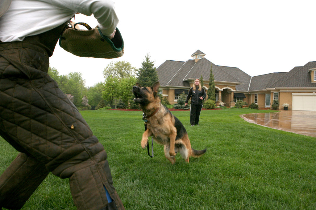 Trained Dogs Do a Great Job of Protecting Your Family