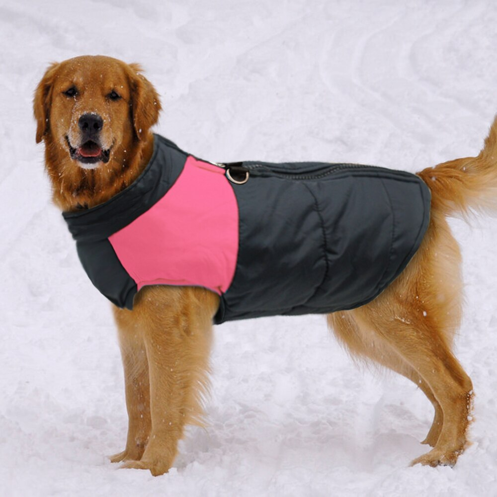 Choosing the Best Jacket for your Dog