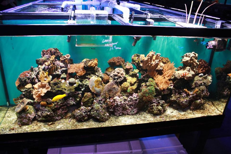 Step-by-Step Guide to Creating a Reef Tank?