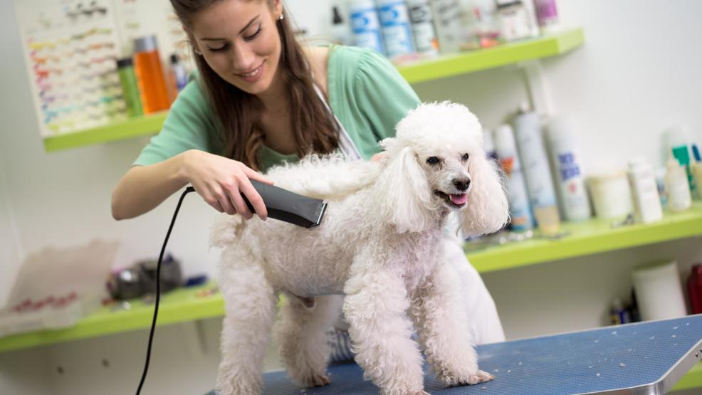 Enhance your Career with Dog Grooming Course by ISPG