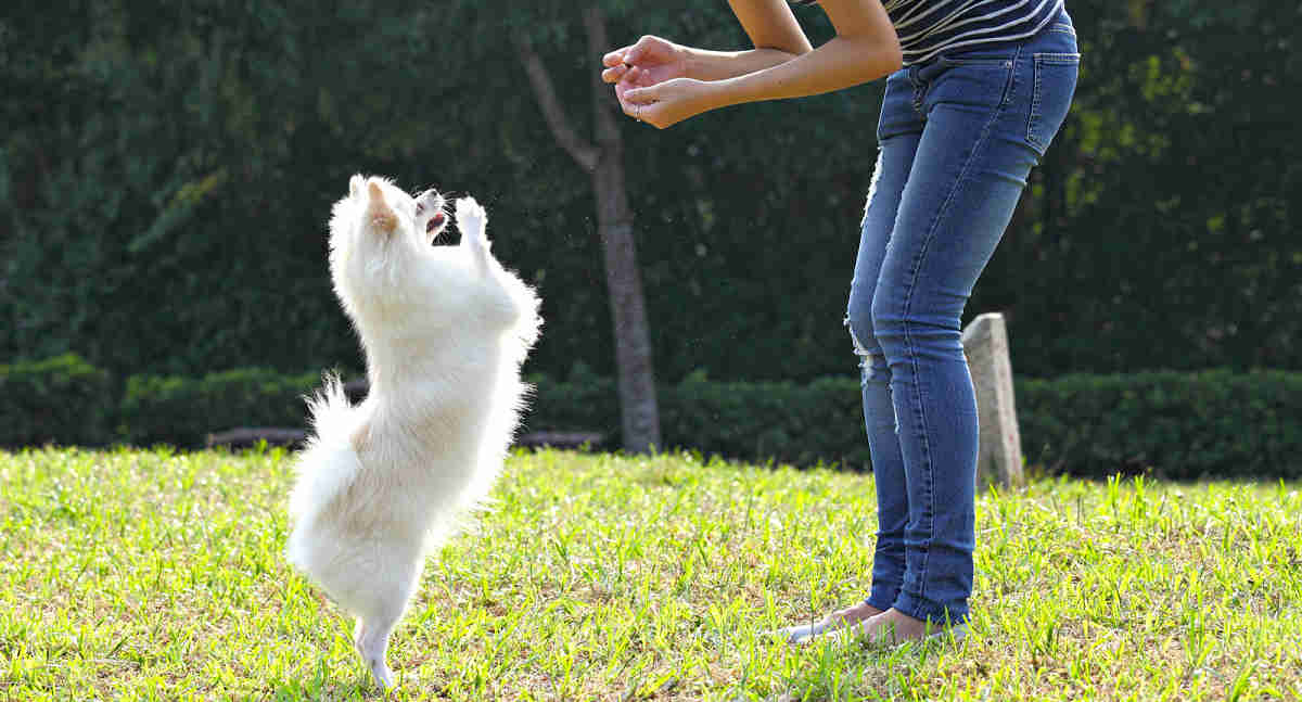 Small Dog Training Tips