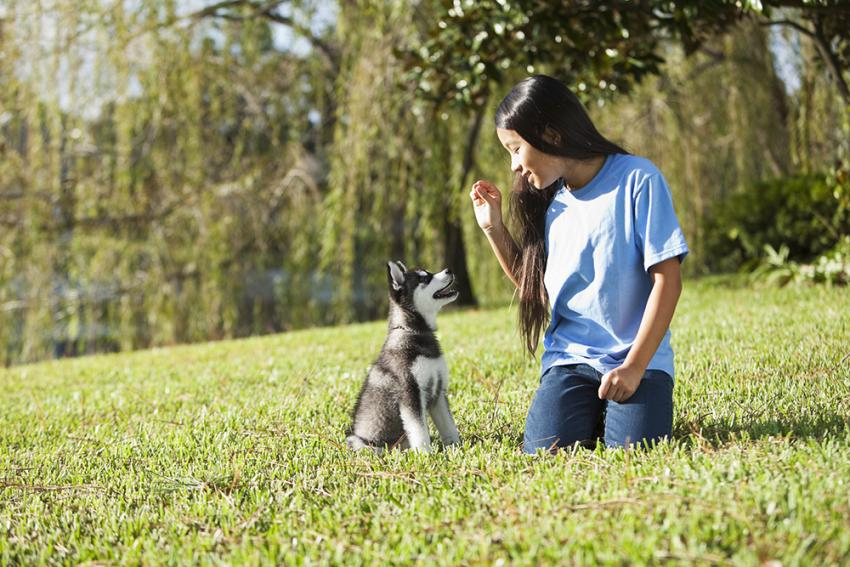 Five Crucial Things To Teach Your New Dog