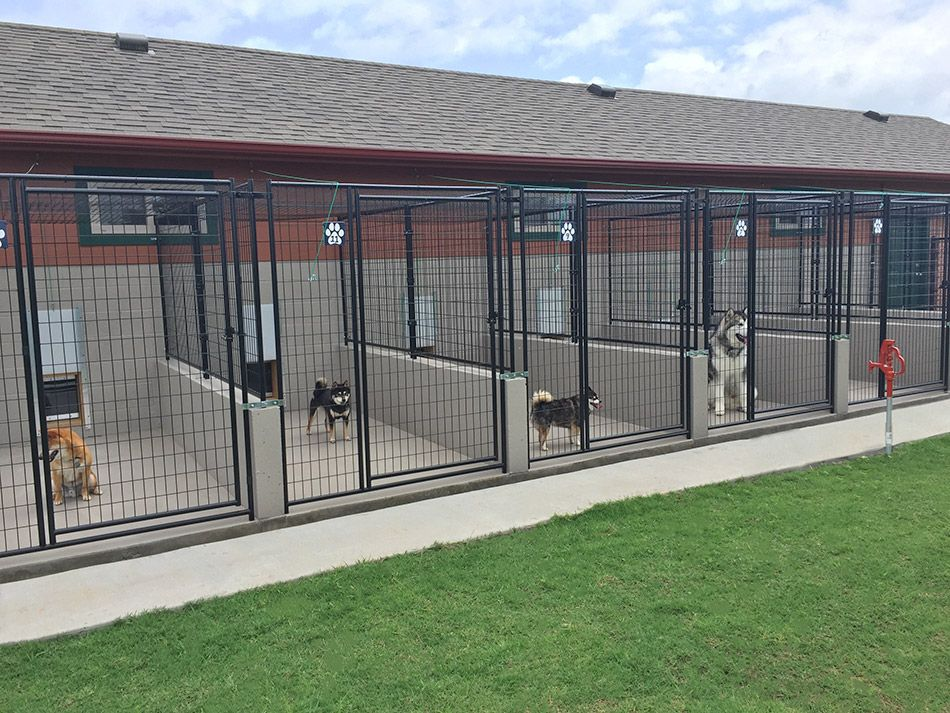 Looking For Dog Boarding? Here's What To Expect!