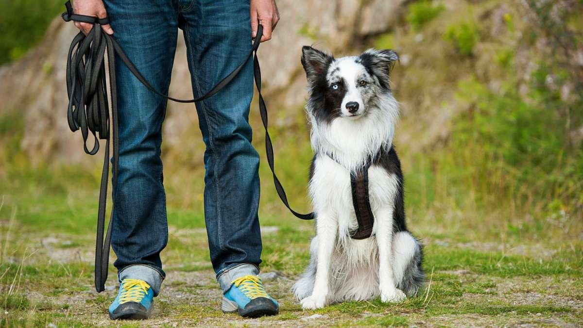 Four Popular Dog Training Methods