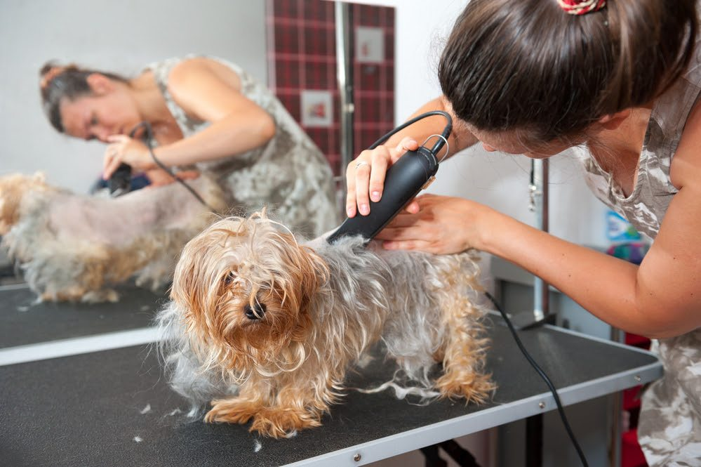 Grooming Your Dog At Home Like A Pro: Check This Guide!