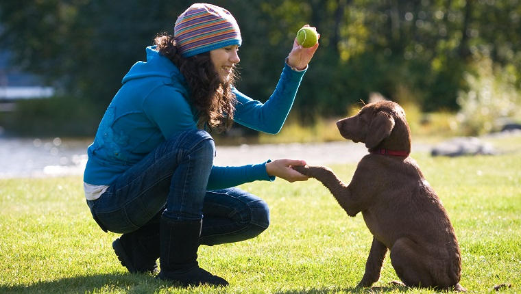 What Everyone Ought To Know About Puppy Training