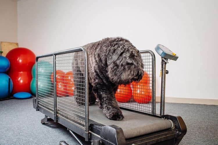 Choose The Best Utility in Dog Treadmill