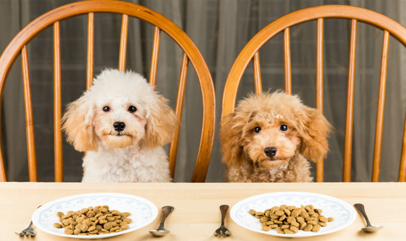 Top 3 Best Dog Food Brands in India