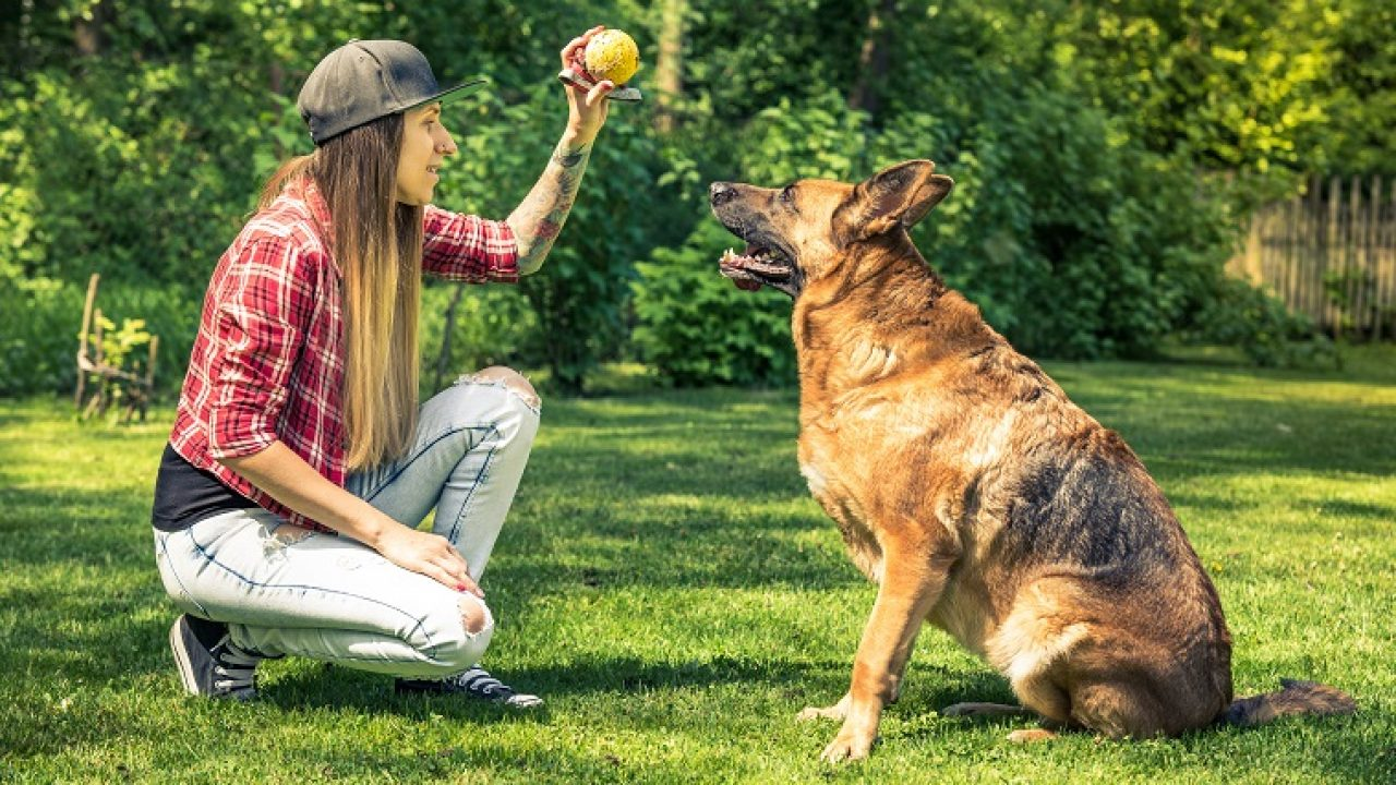 How to Teach a Rescue Dog to Sit – 5 Easy Tricks