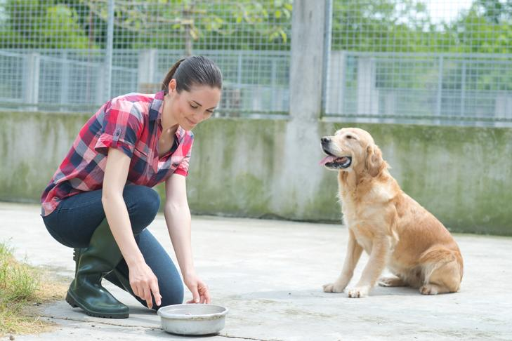 Things To Know About Dog Boarding Services In Philadelphia