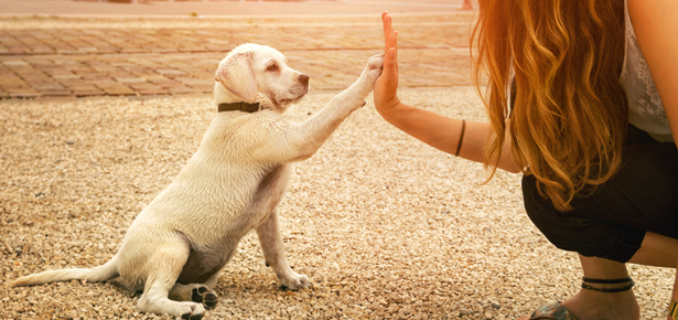5 Valuable Benefits Of Obedience Dog Training