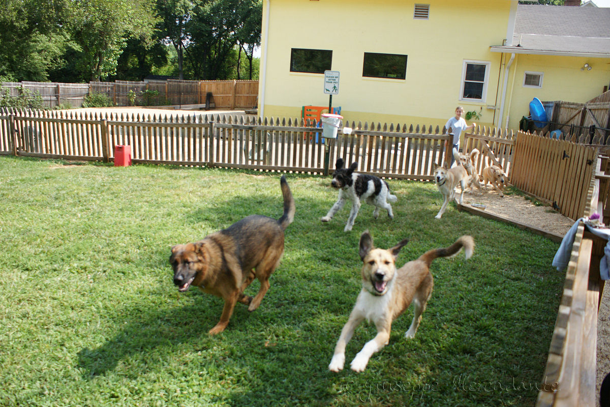 Benefits of taking the help of dog day care in Gaithersburg MD