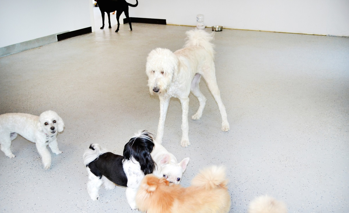 Know About Dog Boarding In Farmingdale NY