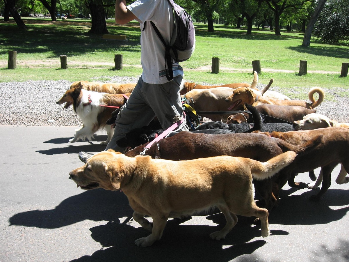 Hire Fancy Paws Dog Walking: Your Dog Needs A Walk!